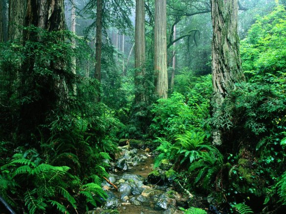 green-amazon-forest_94329-1600x1200